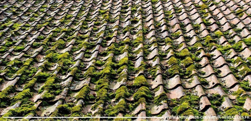 mousse sur une toiture Garches