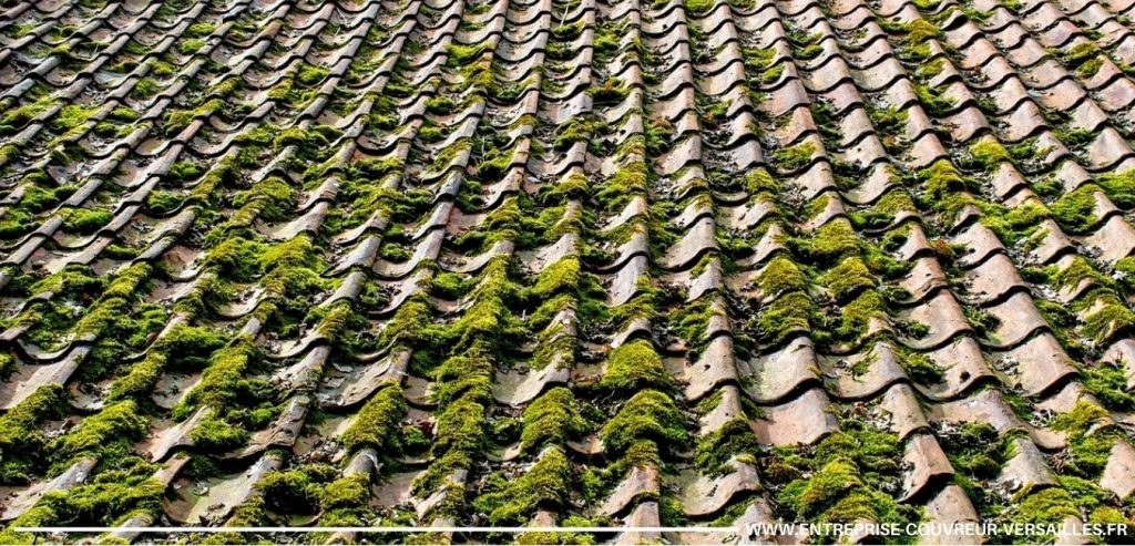 mousse sur une toiture Sèvres