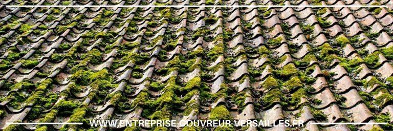 démoussage de toiture Yvelines